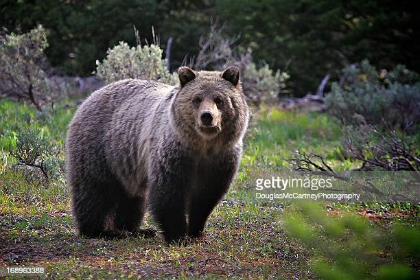 Grizzly Bear National Park