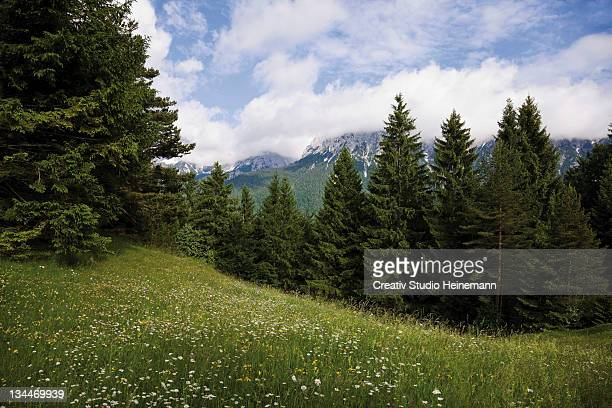 Groeblalm mountain pastures near Mittenwald, Karwendelgebirge mountains, Werdenfelser Land area, Upper Bavaria, Bavaria, Germany, Europe