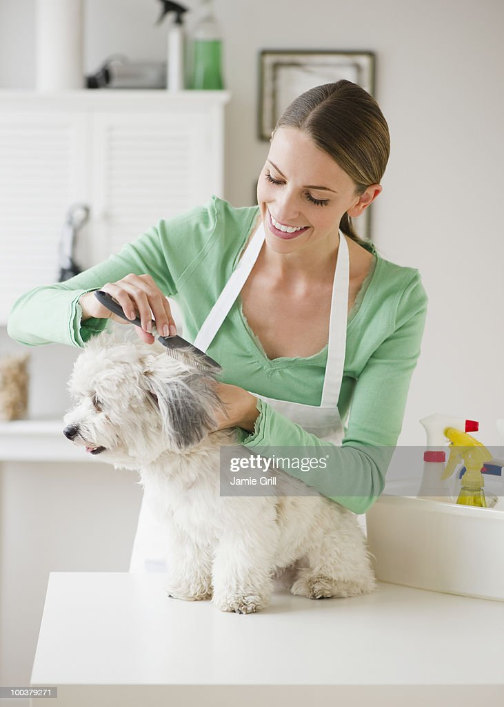 Groomer brushing dog, smiling : Stock Photo