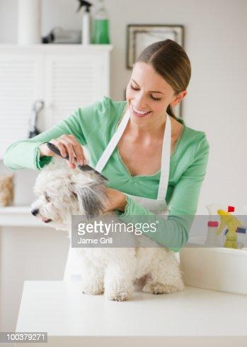 Groomer brushing dog, smiling : Foto de stock