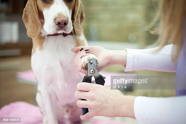 Groomer mit Hund