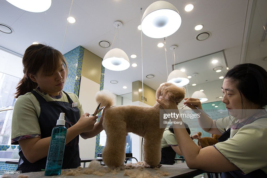 Groomers trim the coat of a dog at Irion pet care center in the Gangnam district of Seoul, South Korea, on Saturday, Dec. 15, 2012. South Koreans vote on Dec. 19 to replace President Lee Myung Bak, whose five-year term ends in February. Photographer: SeongJoon Cho/Bloomberg via Getty Images