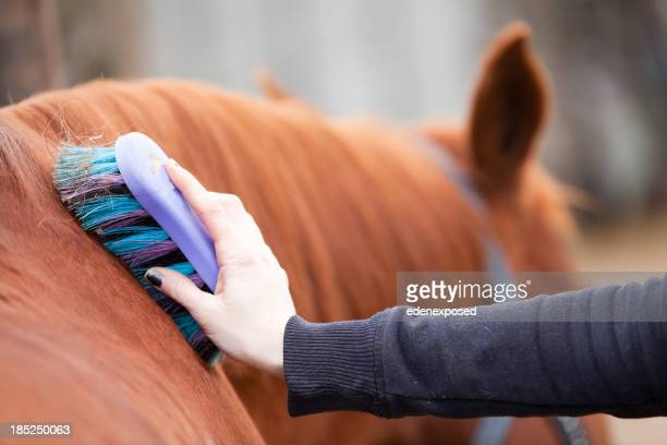 Grooming a Horse