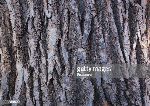 Grooved, Wood Grain, Indoor, Tree Bark, Wood Grains, Natural Pattern