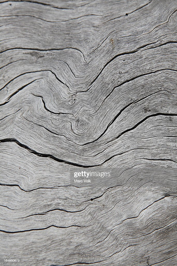 Grooves in a piece of a dead wood