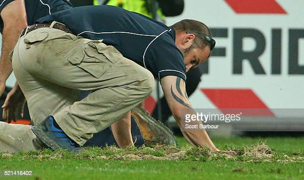 Groundmen work to repair large divots of turf that were ripped up after a scrum during the round eight Super Rugby match between the Rebels and the...