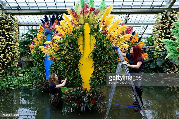 Grounds keepers complete the finishing touches to the carnival dancers in the pond which is made up of Phalaenopsis Bromeliads Cambrias and Miltonias...