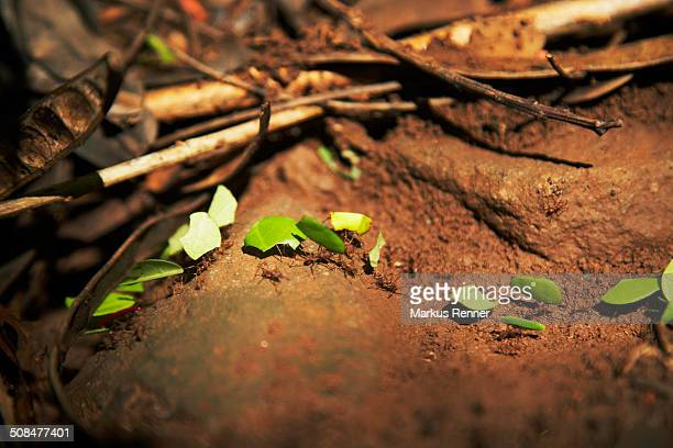 Group of ants carrying leaves outdoors