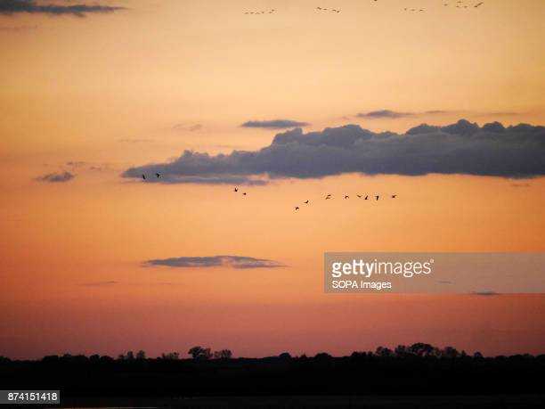 A group of birds seen flying during sunset In late autumn 160 000 cranes stop on lakes and fishponds in the middle of a 'puszta' how Hungarians call...