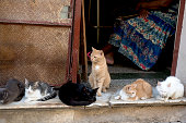 Group of Cat in front of a Barber shop at Centro Havana in Cuba