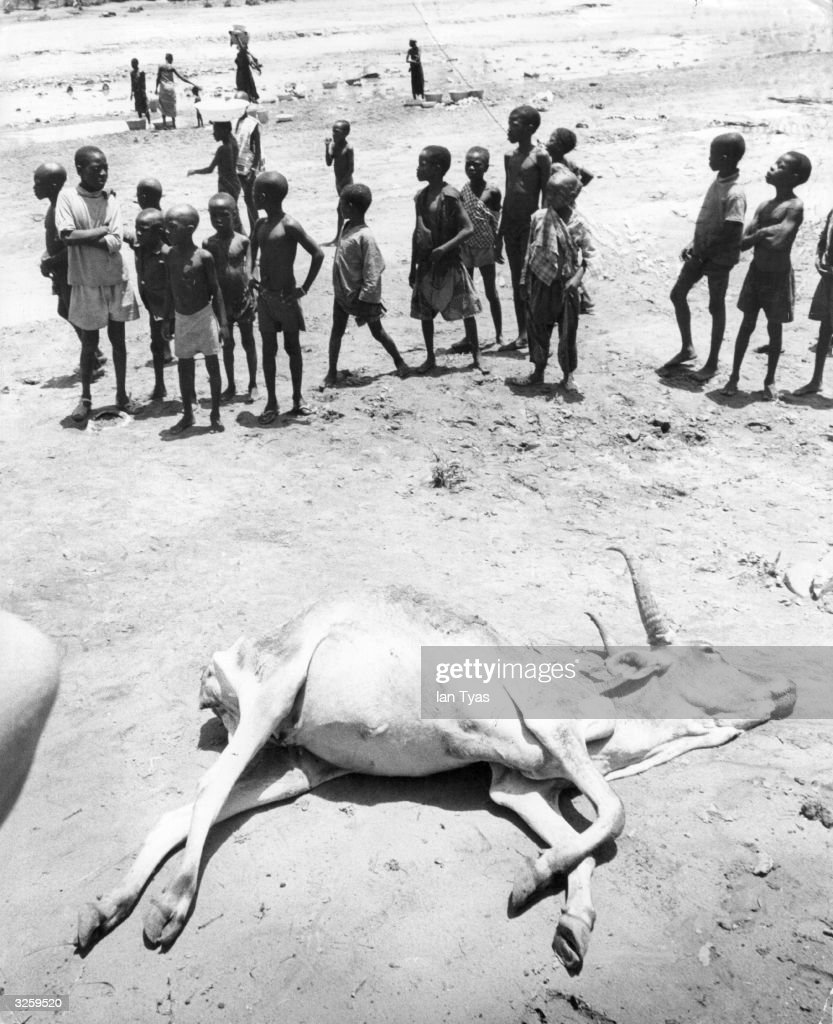 A group of children and a dead cow, victims of the drought in the Sahara.