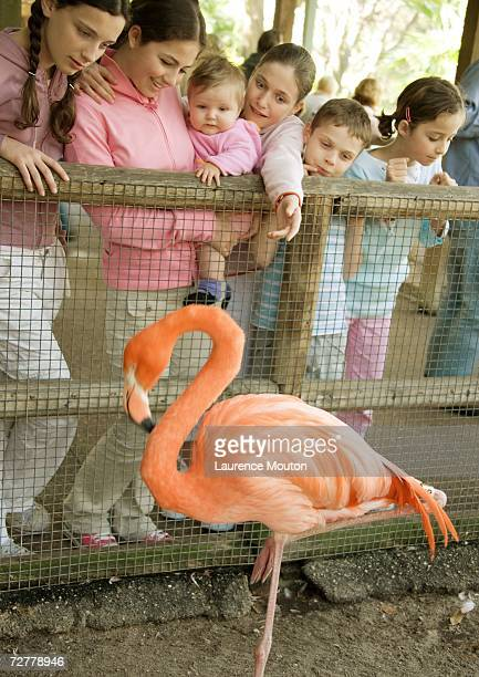 Group of children looking at flamingo