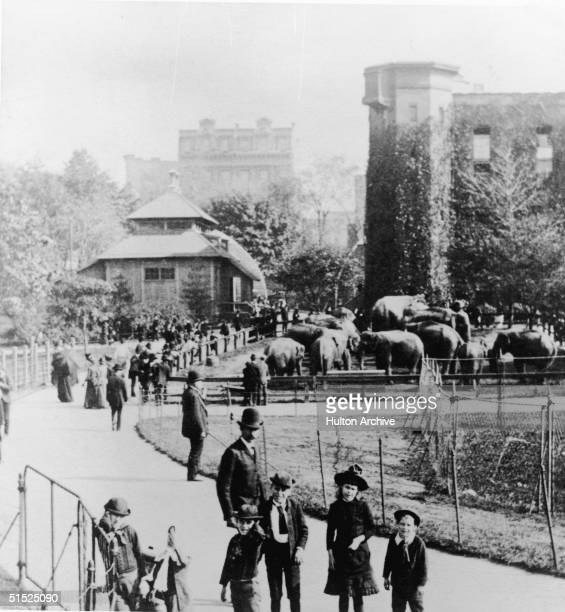 A group of children pose near the elepphant pen in Central Park Zoo New York New York late 1800s