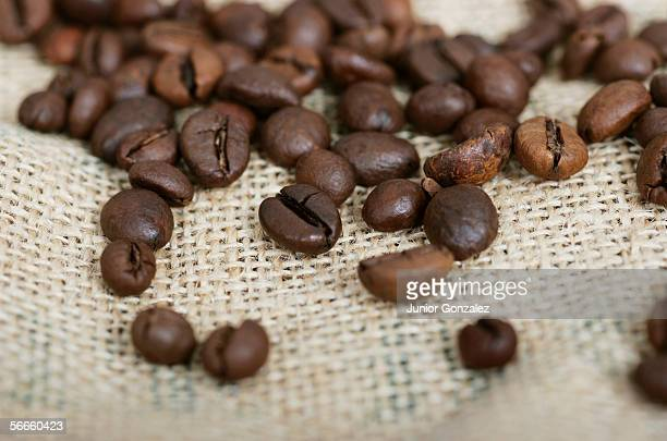 Group of coffee beans