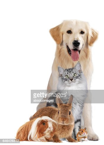Group of different pets : Stock Photo