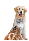 different pets sitting together isolated