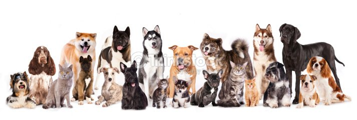 Download The Sims  Cats And Dogs Free Ma