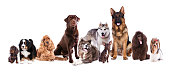 Different breeds of dogs big and small are sitting on a white background