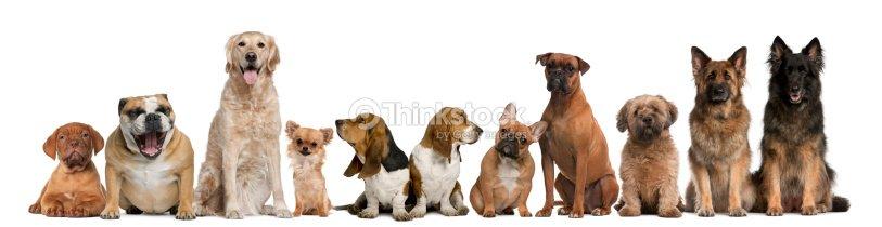Dog Grooming Kanata