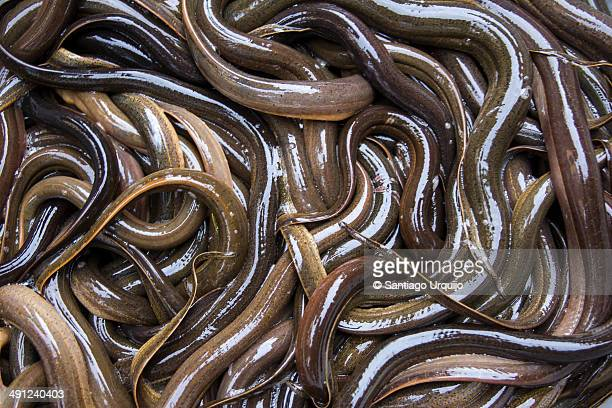 Group of eels on a basket for sale on a market