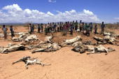 A group of Ethiopians stand nearby rotten carcasses of animals 14 April 2000 in Kabridahar 200 kms northeastern of Gode Ethiopia will need additional...