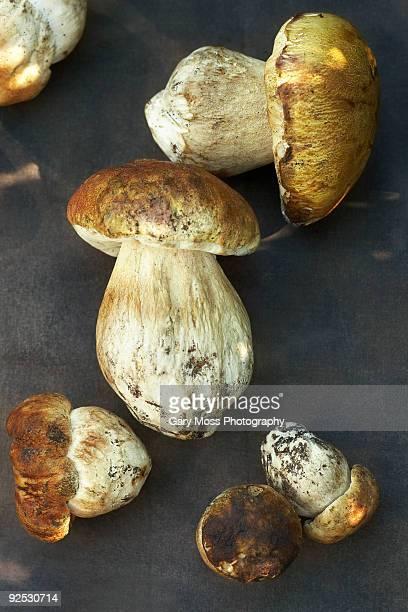 Group of exotic Porcini mushrooms