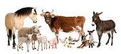 グループの農場の動物、白背景
