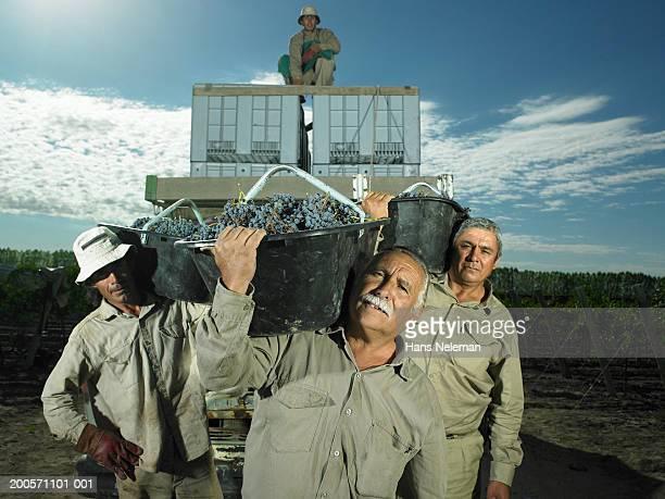 Group of farm workers in vineyard