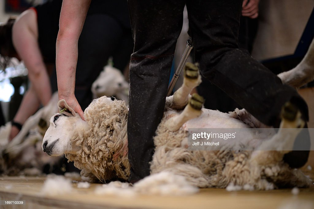 A group of female farm workers take part in a charity sheep shearing marathon, at Newton Stewart Market on May 31, 2013 in Newton Stewart, Scotland. The ten women who work on farms are shearing more than 500 sheep to raise money for the town's Royal Highland Education Trust and local hospital.