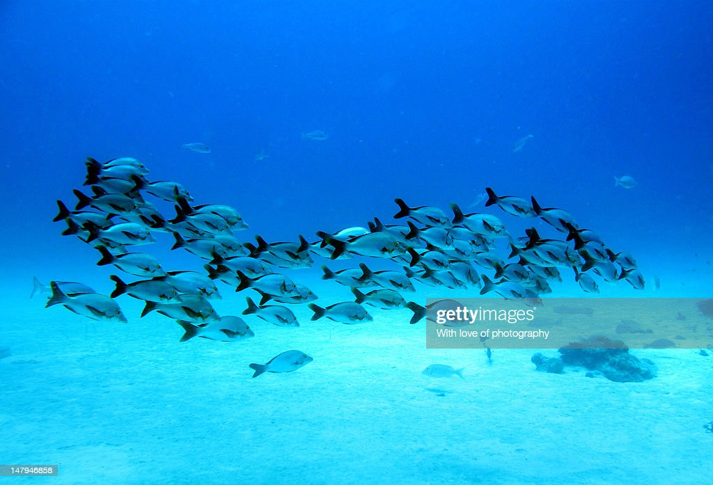 Group of fish underwater Maldives : Stock Photo