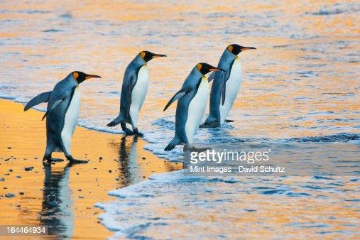 4 人グループの大人のお客様には、キングベッド 1 台、ペンギン水