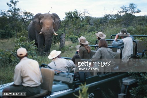 Group of friends on off road vehicle looking at elephant : Stock Photo