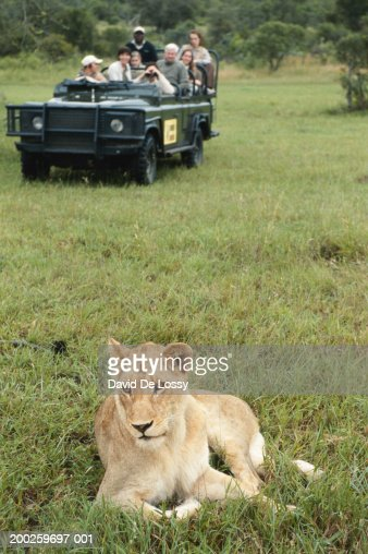 Lioness Front View Group Of Friends On Of...