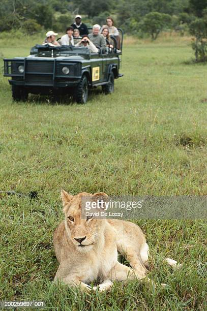 Group of friends on off road vehicle watching lioness, front view