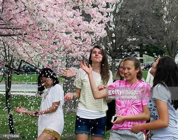A group of girls play in falling Cherry tree petals during the 2012 Cherry Blossom Festival at the Tidal Basin March 22 in Washington DC This season...