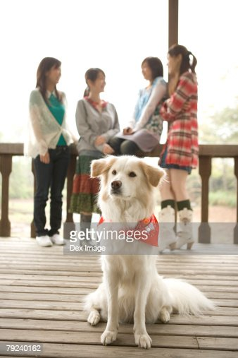 A group of girls, with dog in foreground : Stock Photo