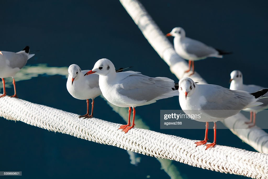 Group of gulls resting by the sea. : Stock Photo