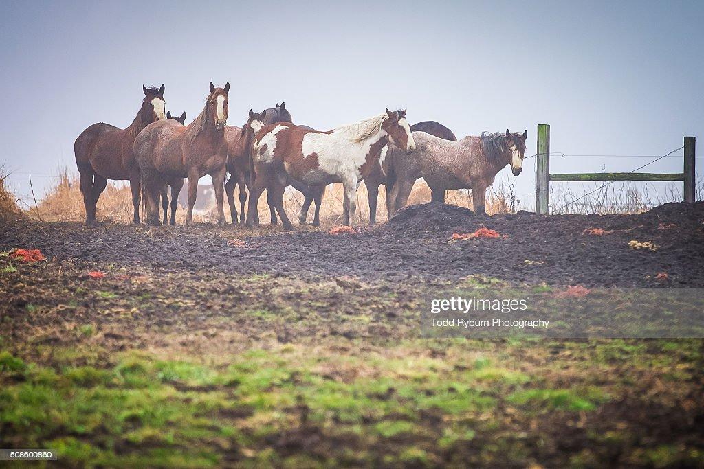 Group of Horses : Stock Photo