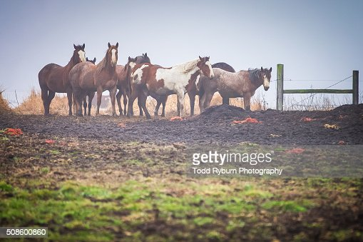 Group of Horses : Stock Photo