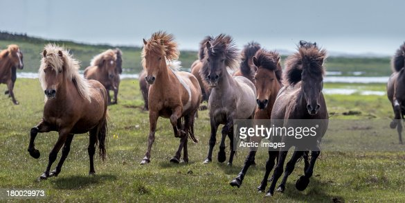 Group of Horses running : Stock Photo