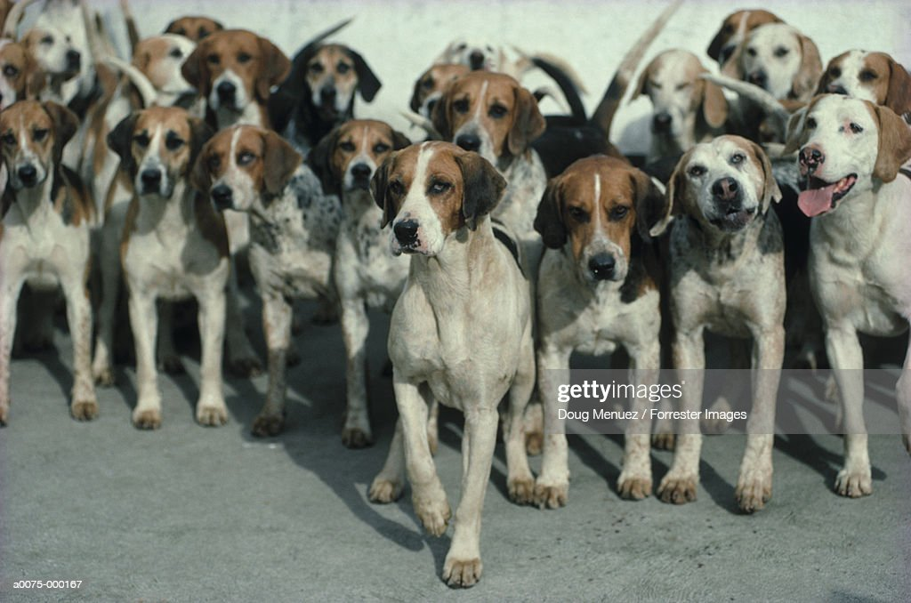 Group of Hunting Dogs
