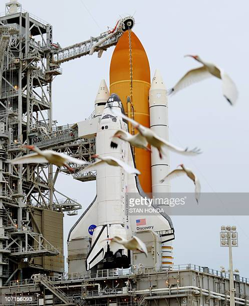 A group of ibis fly by the space shuttle Discovery on Pad 39A November 4 2010 as weather has delayed the planned launch at Kennedy Space Center in...
