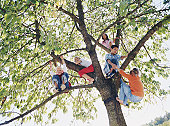 Group of kids (8-10) on tree