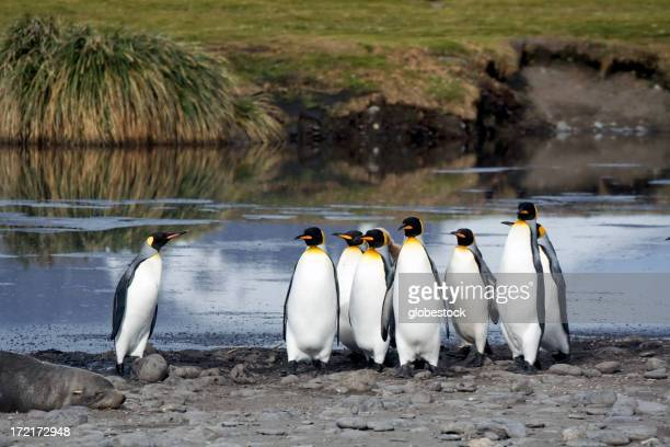 A group of king penguins in front of water in South Georgia