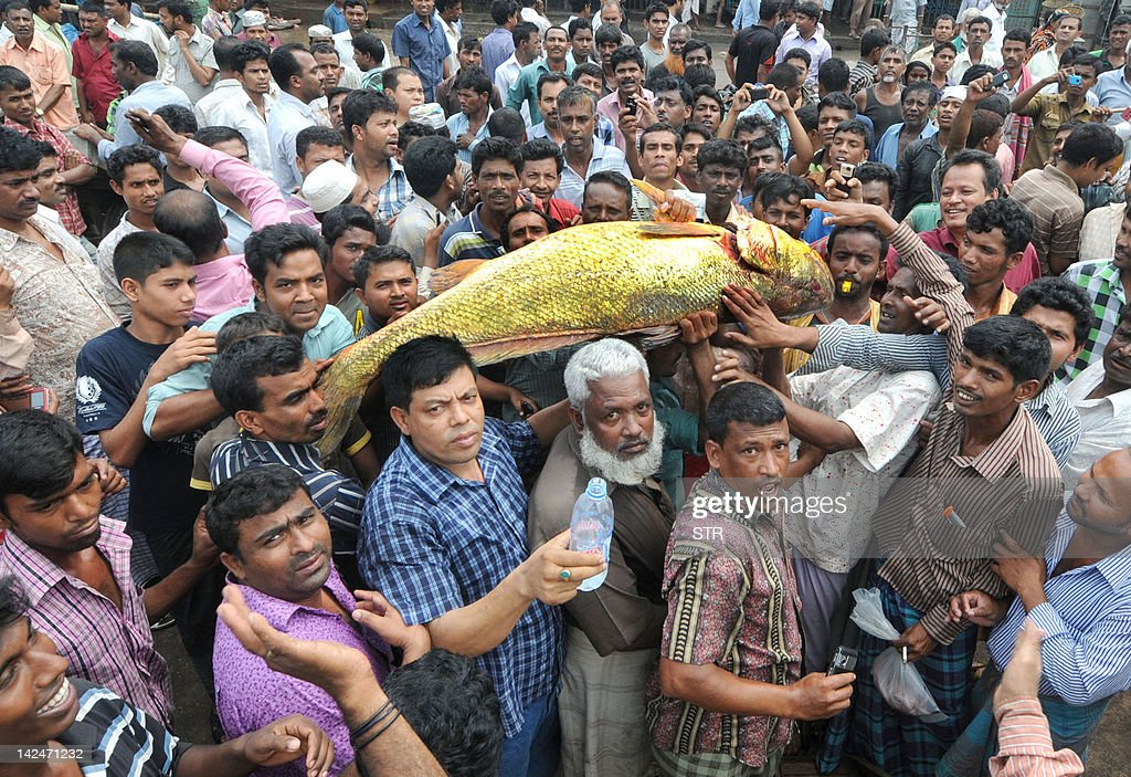 A group of men carry a golden snapper fish at Ghat fish market in Bangladesh's southeastern port city of Chittagong on April 4, 2012. A snapper fish caught by fishermen in the Bay of Bengal on April 4 has been sold at 40,000 USD because of its rare golden colour.