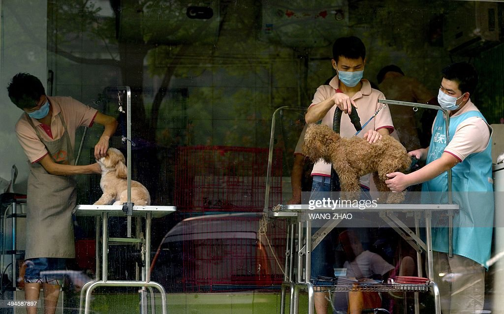 A group of men shave dogs at a pet shop in Beijing on May 30, 2014. Dog ownership is popular amongst China's elderly and the growing middle class but owners cannot legally keep dogs taller than 36 centimeters. AFP PHOTO / WANG ZHAO