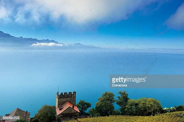 Group of migratory birds gather over lake Geneva