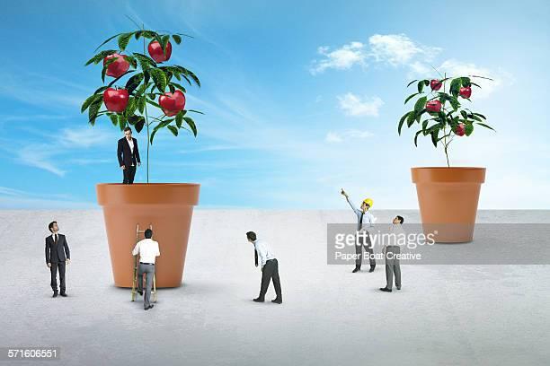 Group of miniature businessmen growing apple tree
