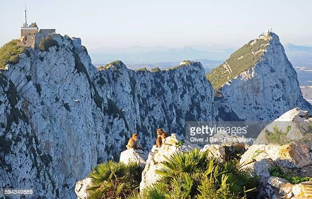 Group of monkeys on the Rock Gibraltar