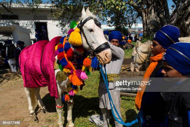 A group of Nihang Sikhs decorate a horse at a camp during Hola Mohalla festival Hola Mohalla is a threeday festival started by the tenth Sikh Guru...